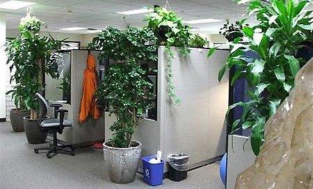 Le piante ottime compagne in ufficio - Piante per ufficio ...